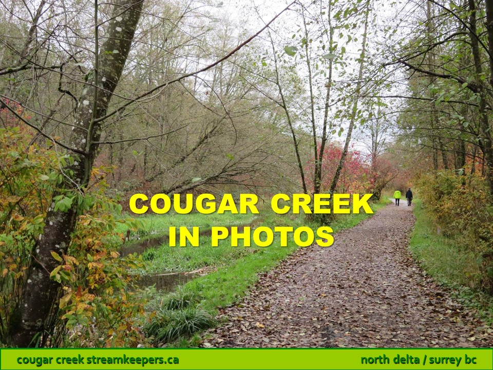Cougar Creek in photos
