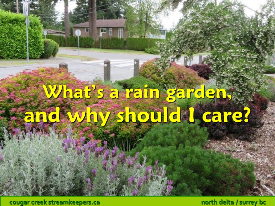 What's a rain garden, and why should I care?